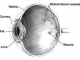 Symptoms of a damaged retina